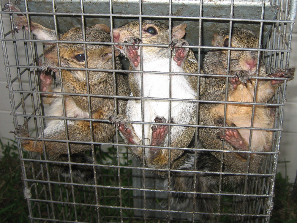 Wildlife Removal Photograph Gallery Pictures Amp Images