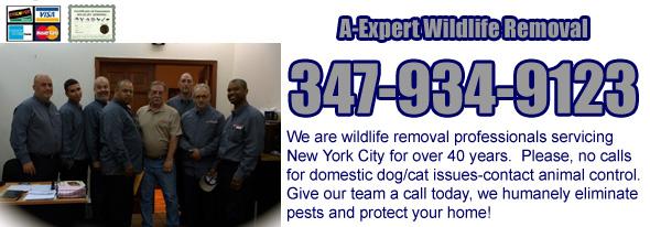 Wildlife Removal Services Staten Island