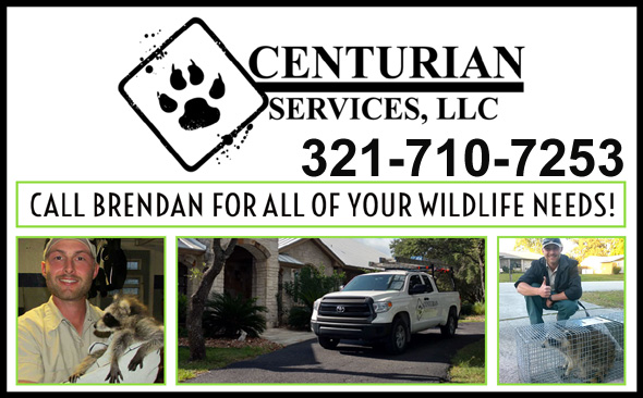 Brevard County Wildlife Control Pest Wildlife Removal