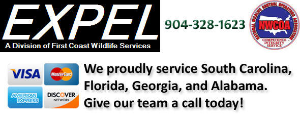 St Johns County Wildlife Control Wildlife Removal Company