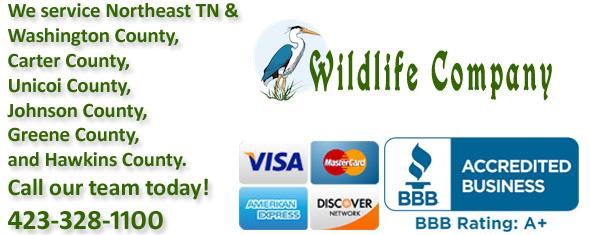 Bristol Wildlife Control Business Sullivan County Tn