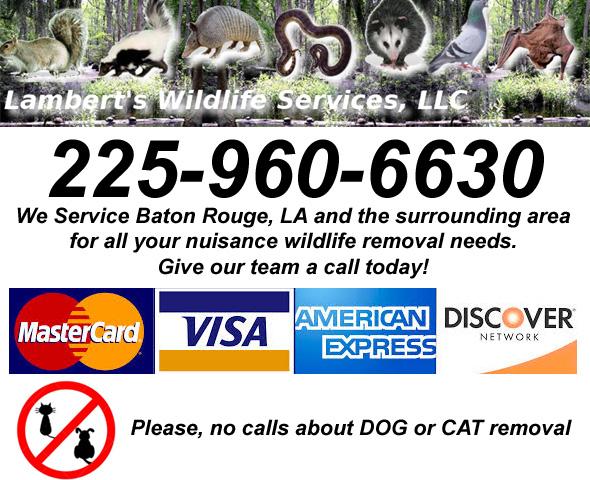 Gonzales Wildlife Control Business Ascension County La