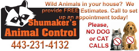 Dundalk Wildlife Control Business, Baltimore County MD