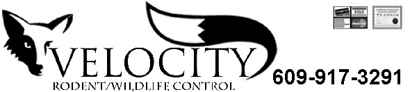 second image for Hamilton County Tx Animal Control with Hamilton Township Wildlife Control Business, Mercer County ...