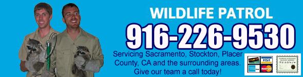 Stockton Wildlife Control Business San Joaquin County Ca