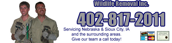 Image Result For Critter Control Omaha