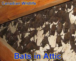 Ontario Wildlife Control Business Ontario Province Canada