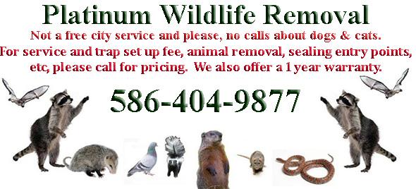 Macomb County Wildlife Control Business Macomb County Mi