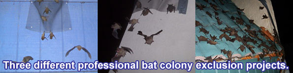 A Professional Bat Removal System Such As Mine Ensures That The Colony Will No Longer Use Your Home Or Business Roosting Area And Bats Can Get