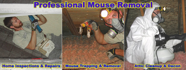 How Much Does Mouse Removal Cost
