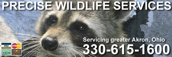 Brunswick Wildlife Control Business, Medina County OH