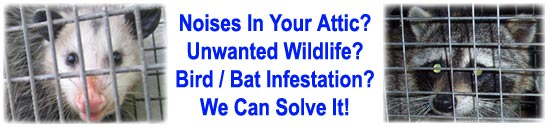 Chico Wildlife Control Business Butte County Ca Critter
