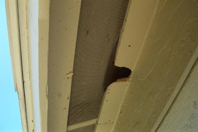 Wildlife Damage Repair Photos