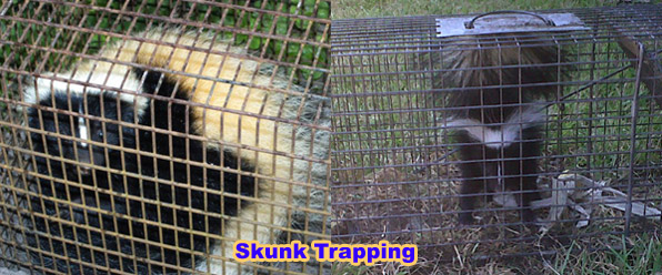 How Much Does Skunk Removal Cost