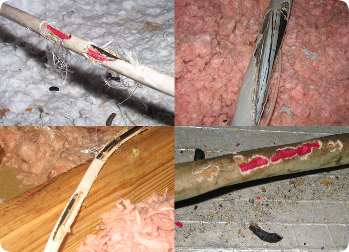 Chewed Wires