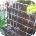 Wildlife Removal Blog 2004