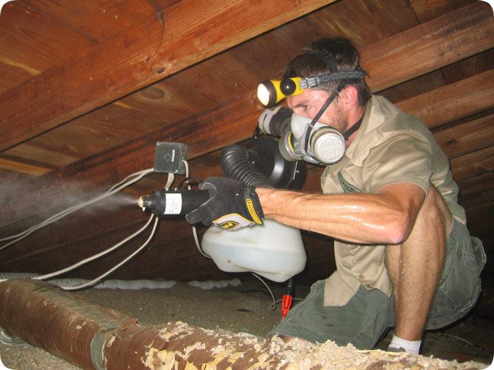Attic Cleanup Remove Wildlife Waste Amp Poop