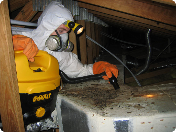 How To Vacuum The Attic To Get Rid Of Animal Waste