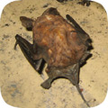 Wildlife Removal Blog A Critter Trapper S Journal