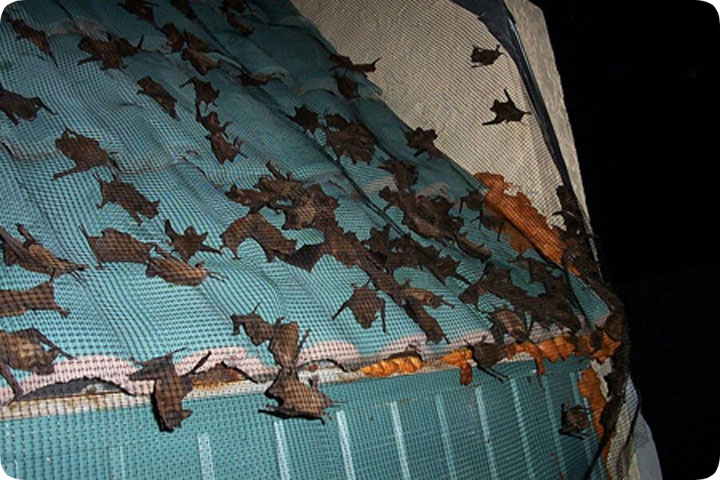 Bats In A Barrel Tile Roof
