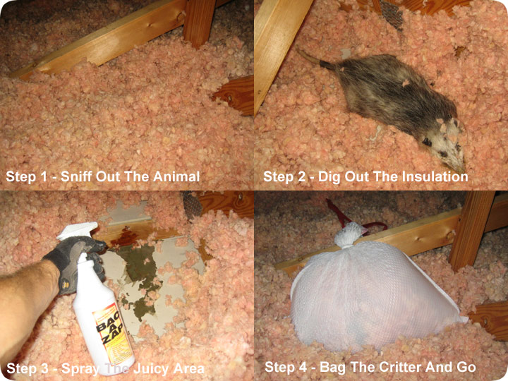 How To Remove A Dead Animal In The Attic