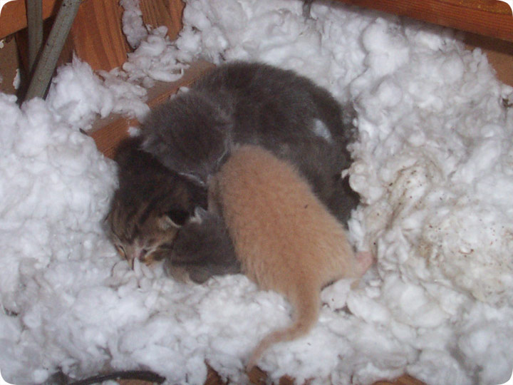 Kittens In The Attic How To Get Them Out