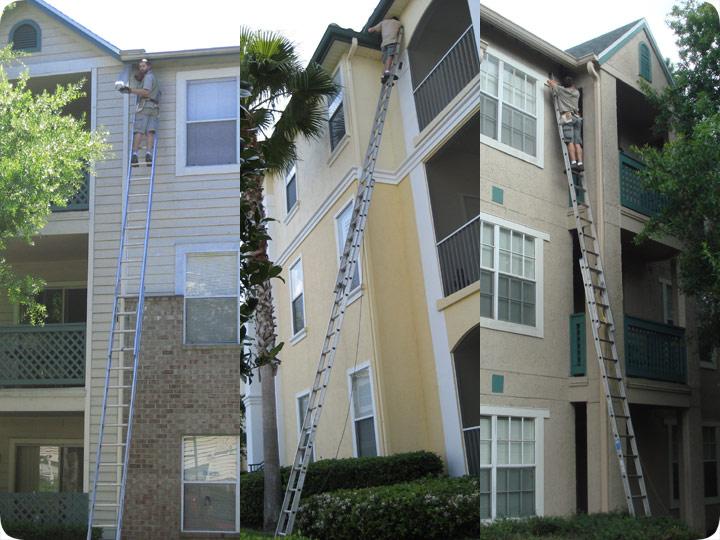 Nuisance Wildlife Ladder Work On Apartments
