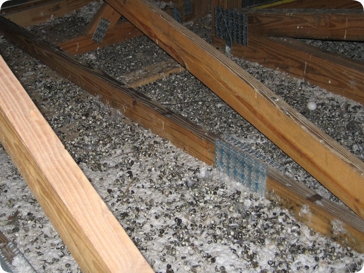 Pigeon Droppings Amp Waste In An Attic