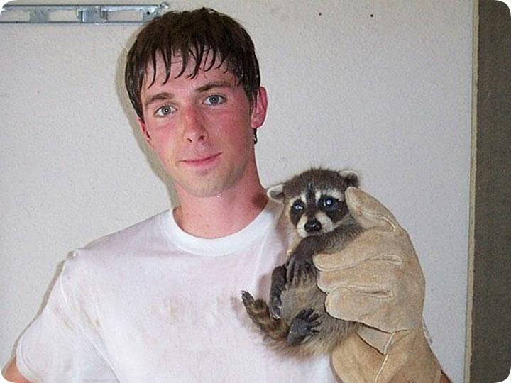 Raccoon Capture Catching Raccoons