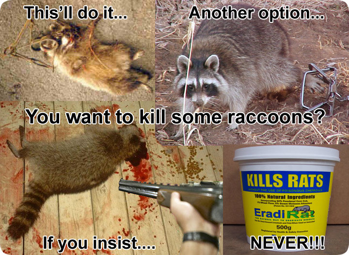 Raccoon Poison How To Kill Raccoons