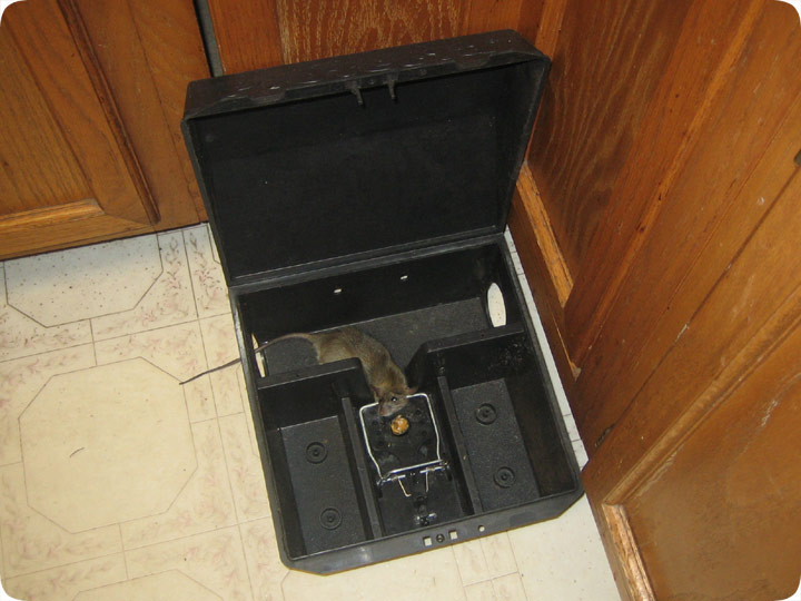 Bait Box To Trap Rat Trapping Station