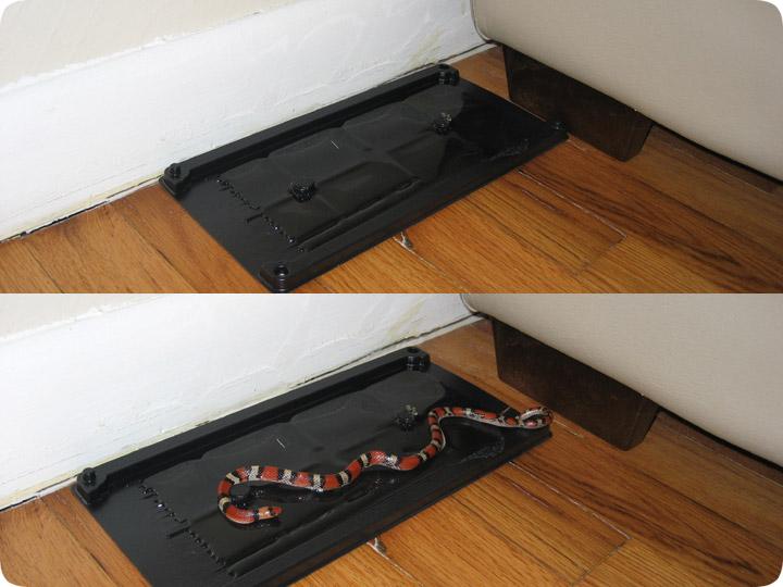 Snake trap glue board