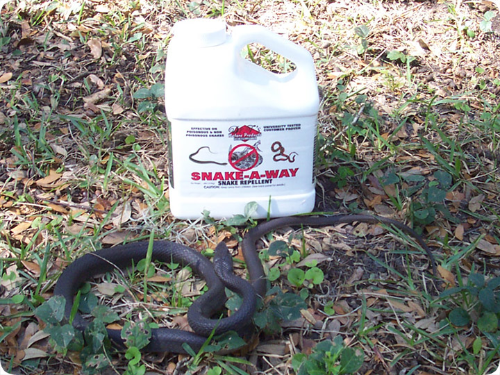 Snake Powder Spray To Keep Away Snakes