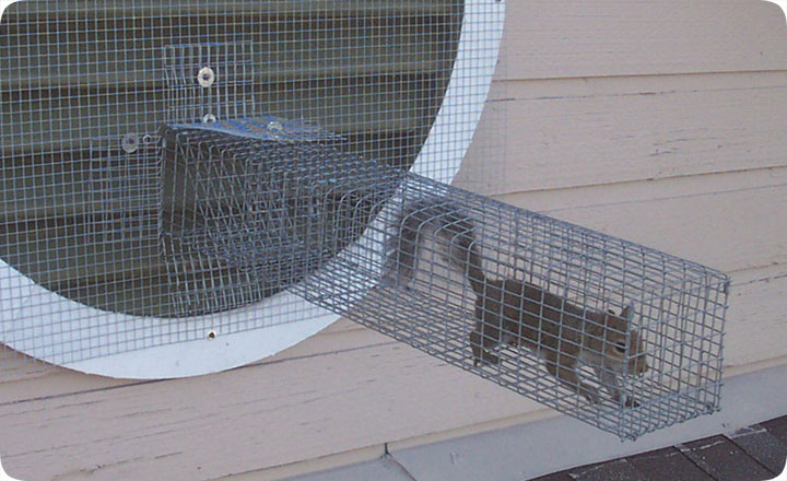 One Way Door To Remove Squirrels