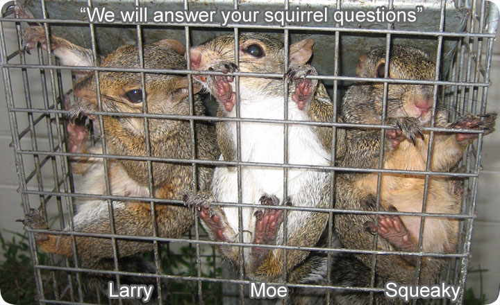 Squirrel Questions And Answers