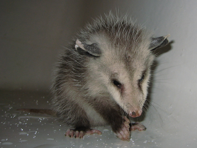40 Cute Baby Photos - World's Cutest Babies Pictures Cute baby possum pictures