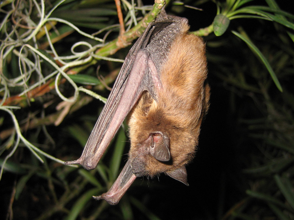 Bat Photograph Gallery Pictures Amp Images
