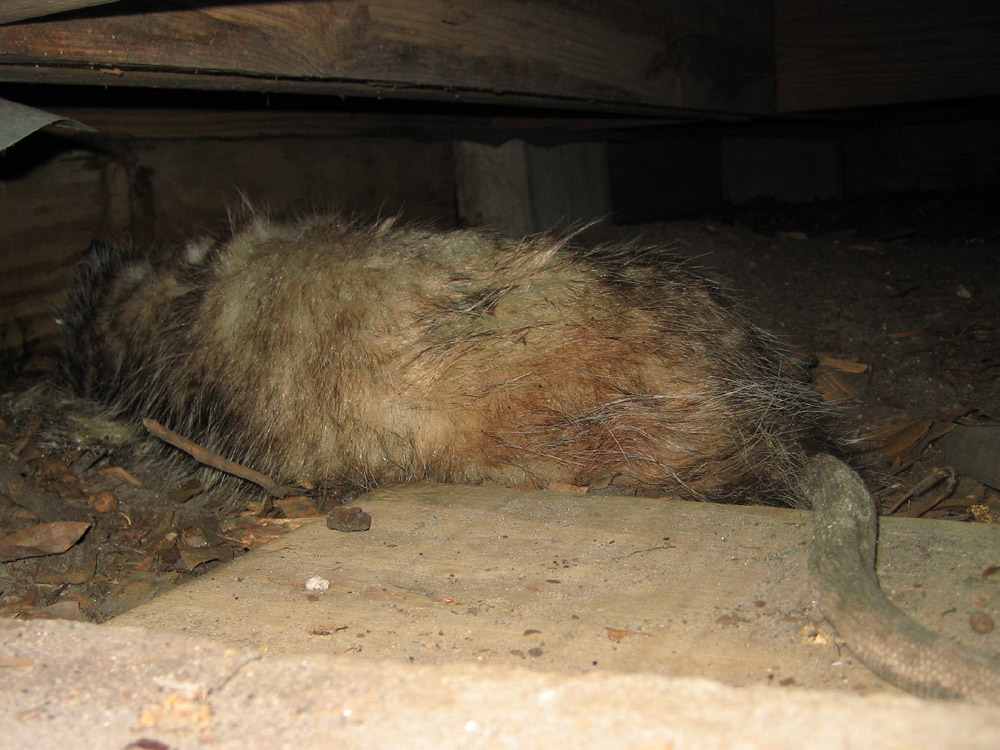 Dead Animal Photograph Gallery - Pictures & Images