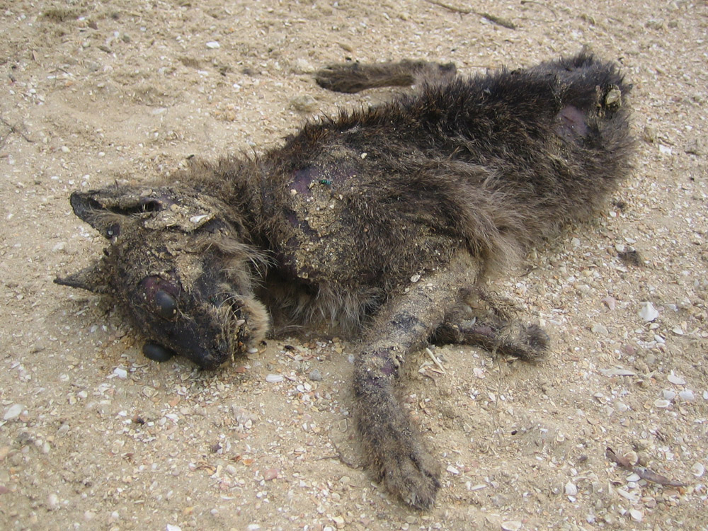 Dead Animal Photograph Gallery Pictures Amp Images