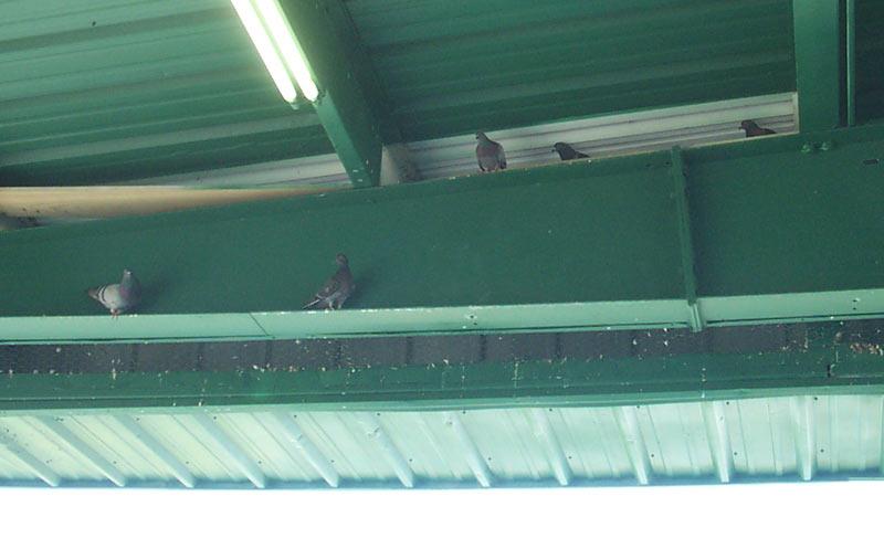 Bird Repellent Pigeon Repellant