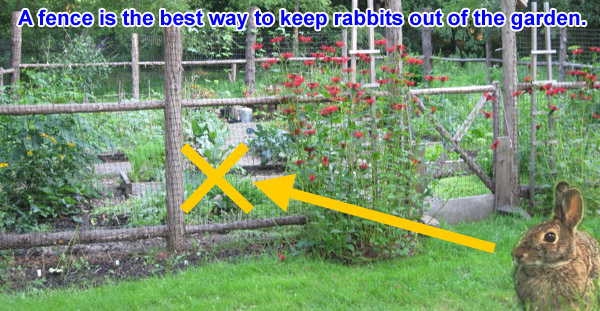 if you doubt the power of the fence and want to try some of the other anti rabbit ideas out there you have a variety to pick from
