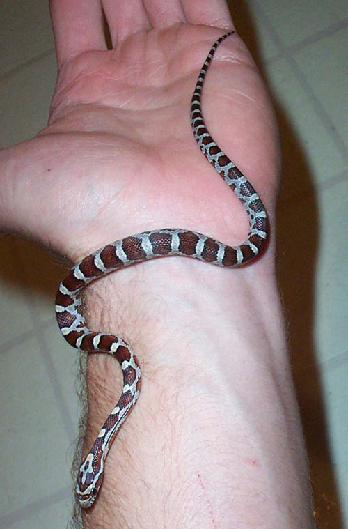 Florida Snake Photo Picture Gallery