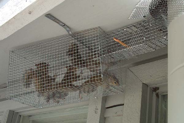 How To Get Rid Of Squirrels In The Soffit Or Eave