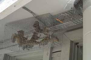 Florida Squirrel Photo Picture Gallery