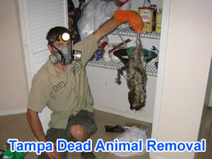 Tampa Dead Animal Carcass Removal Odor Company