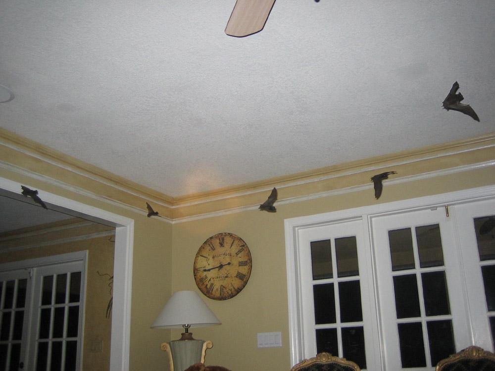 Bat Photograph 004 Bats Flying Inside A House