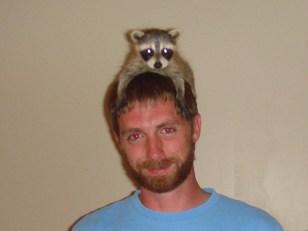 Raccoon Photograph 035 - The best hat I ve ever worn. c9cc91784fe