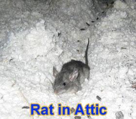 Attic Noises At Night Image Balcony And Attic