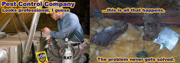 The Best Way To Kill Mice Poison Or Snap Traps