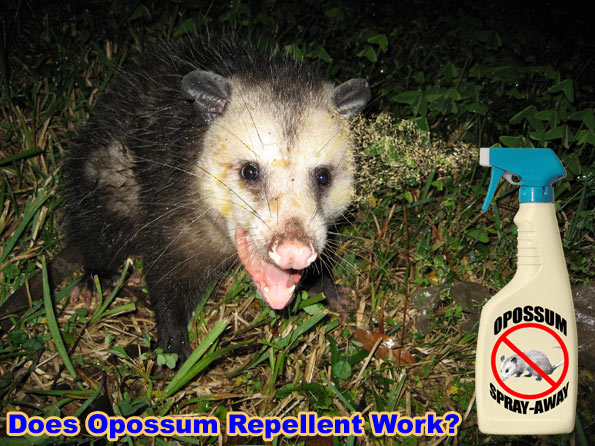 One repellent that does seem to work well is the motion activated sprinkler  system. You can pick these up online or in a local garden store. - How To Keep Away Opossums From Your Yard, House, Property